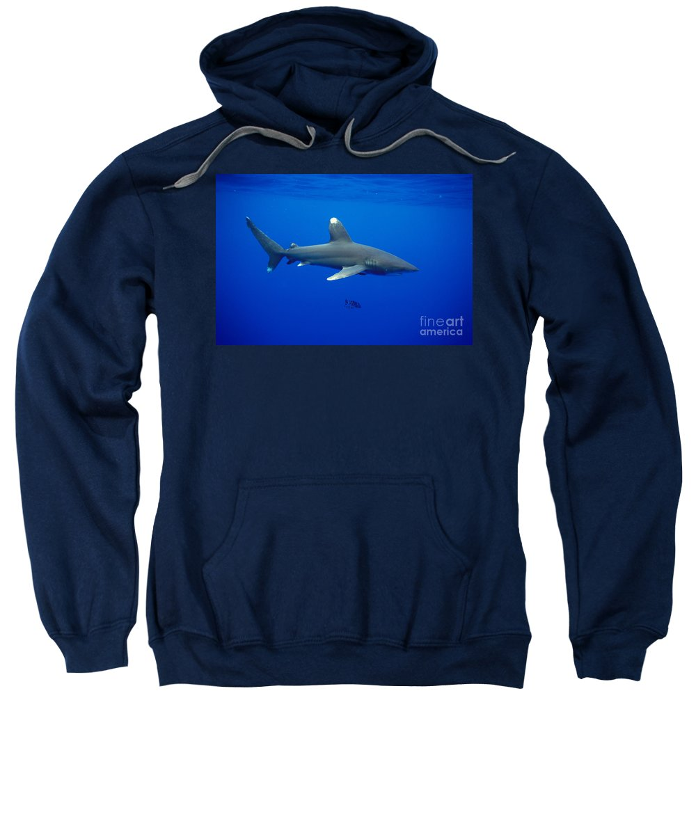 Animal Art Sweatshirt featuring the photograph Oceanic Whitetip Shark by Dave Fleetham - Printscapes