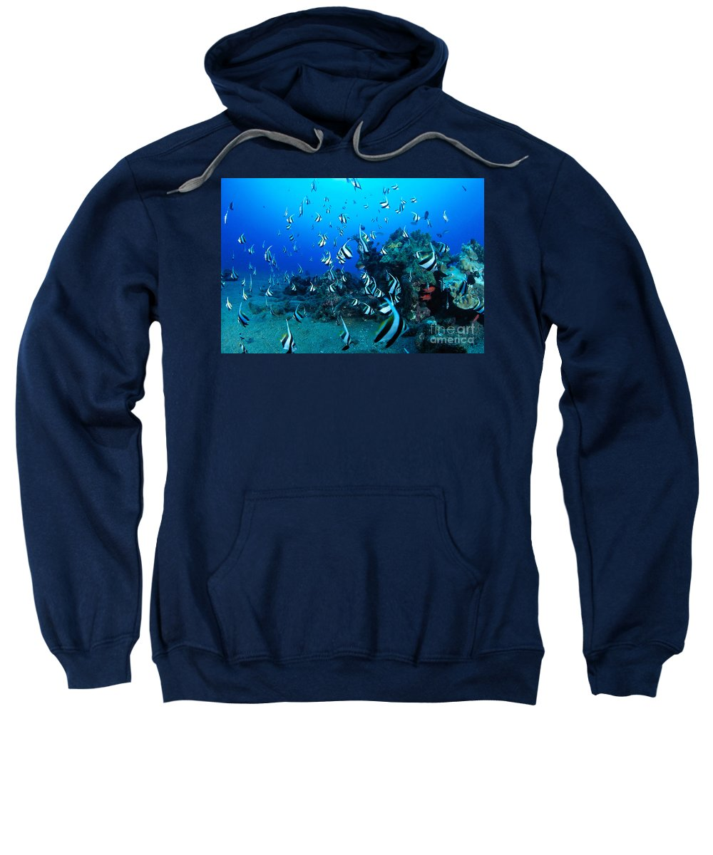 Animal Art Sweatshirt featuring the photograph Hawaiian Reef Scene by Dave Fleetham - Printscapes