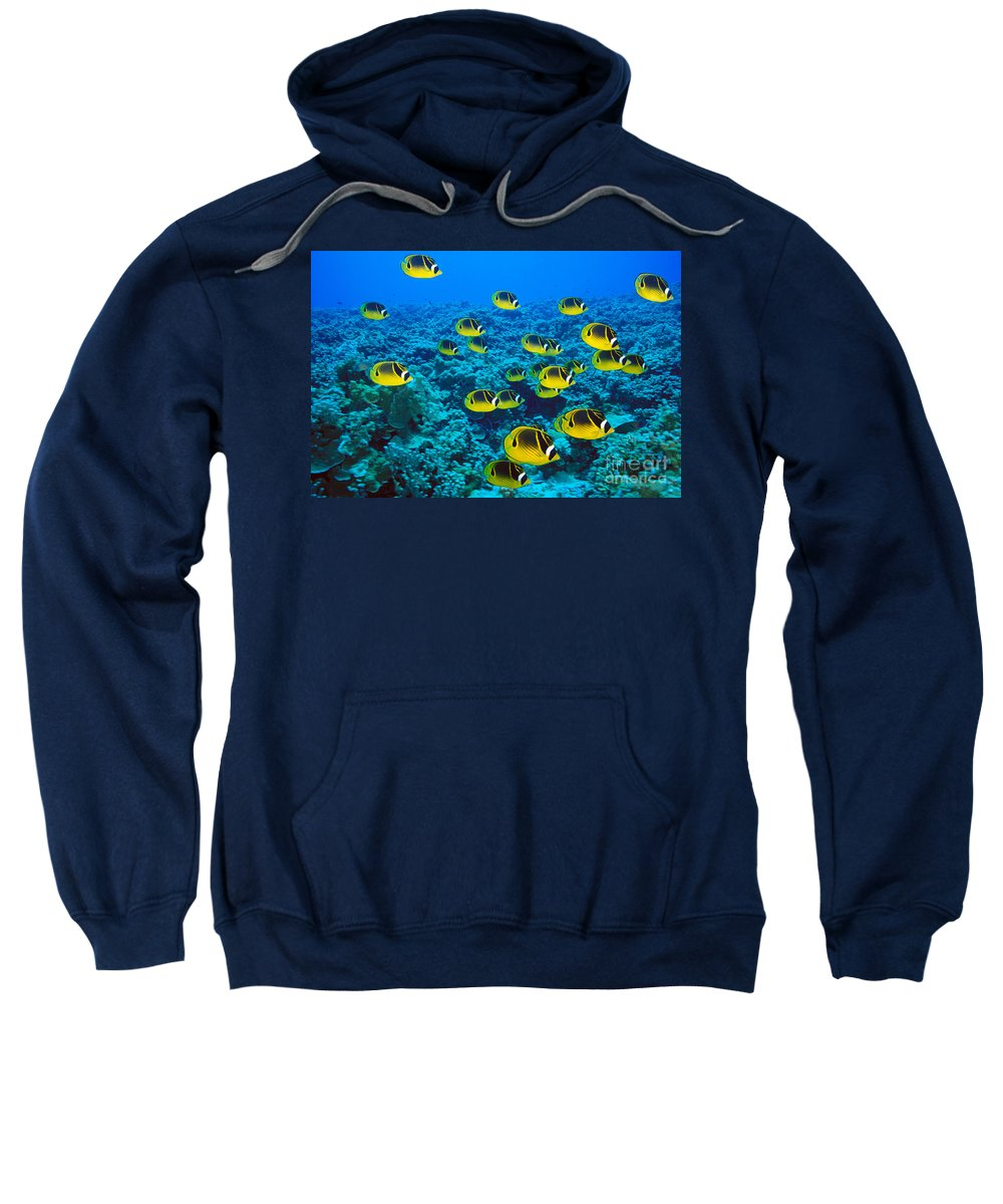 Animal Art Sweatshirt featuring the photograph Raccoon Butterflyfish by Dave Fleetham - Printscapes