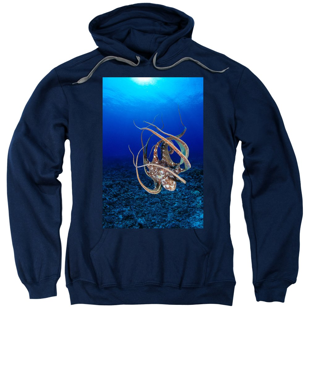 Animal Art Sweatshirt featuring the photograph Hawaii, Day Octopus by Dave Fleetham - Printscapes