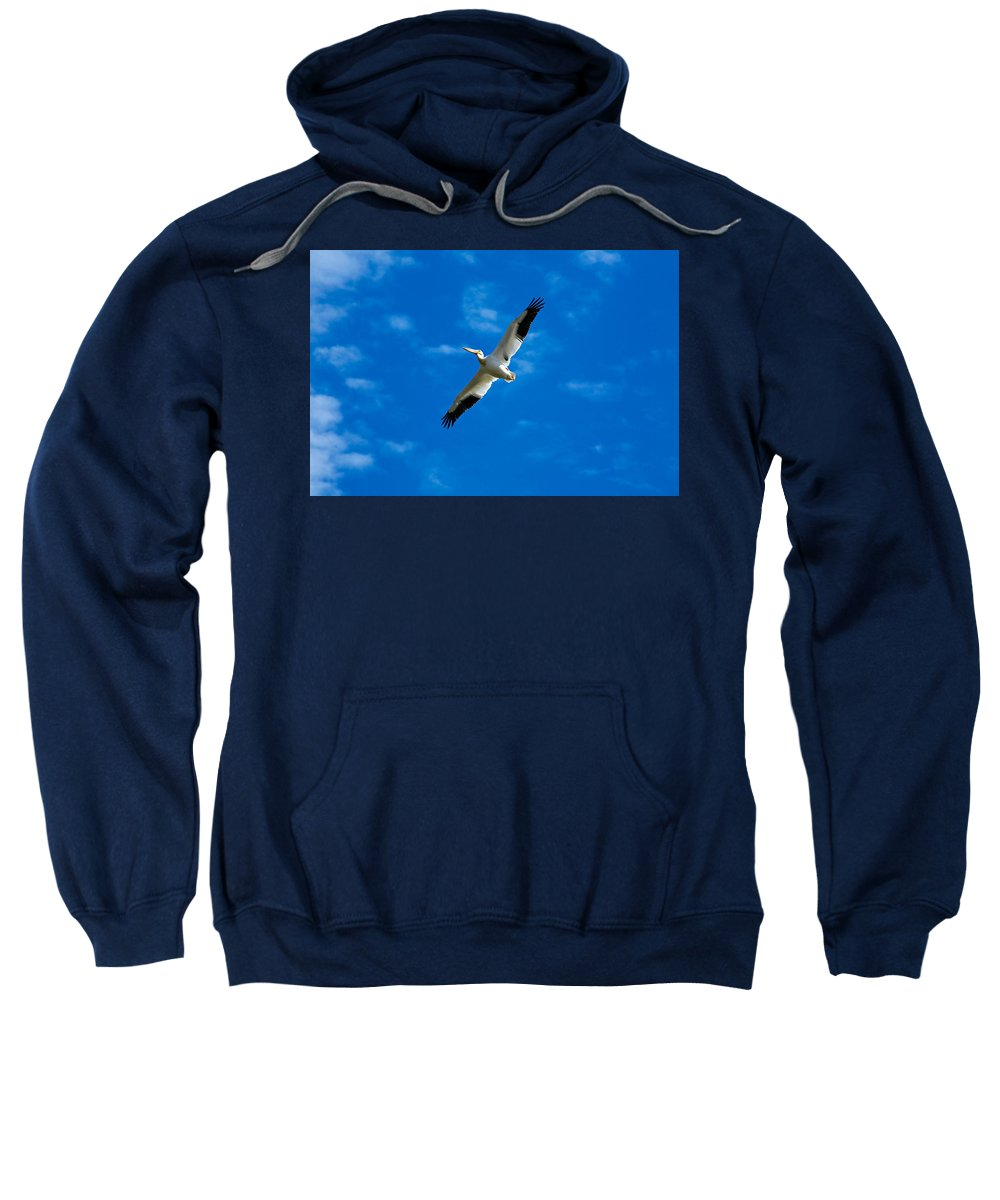American Sweatshirt featuring the photograph American White Pelican by Marilyn Hunt