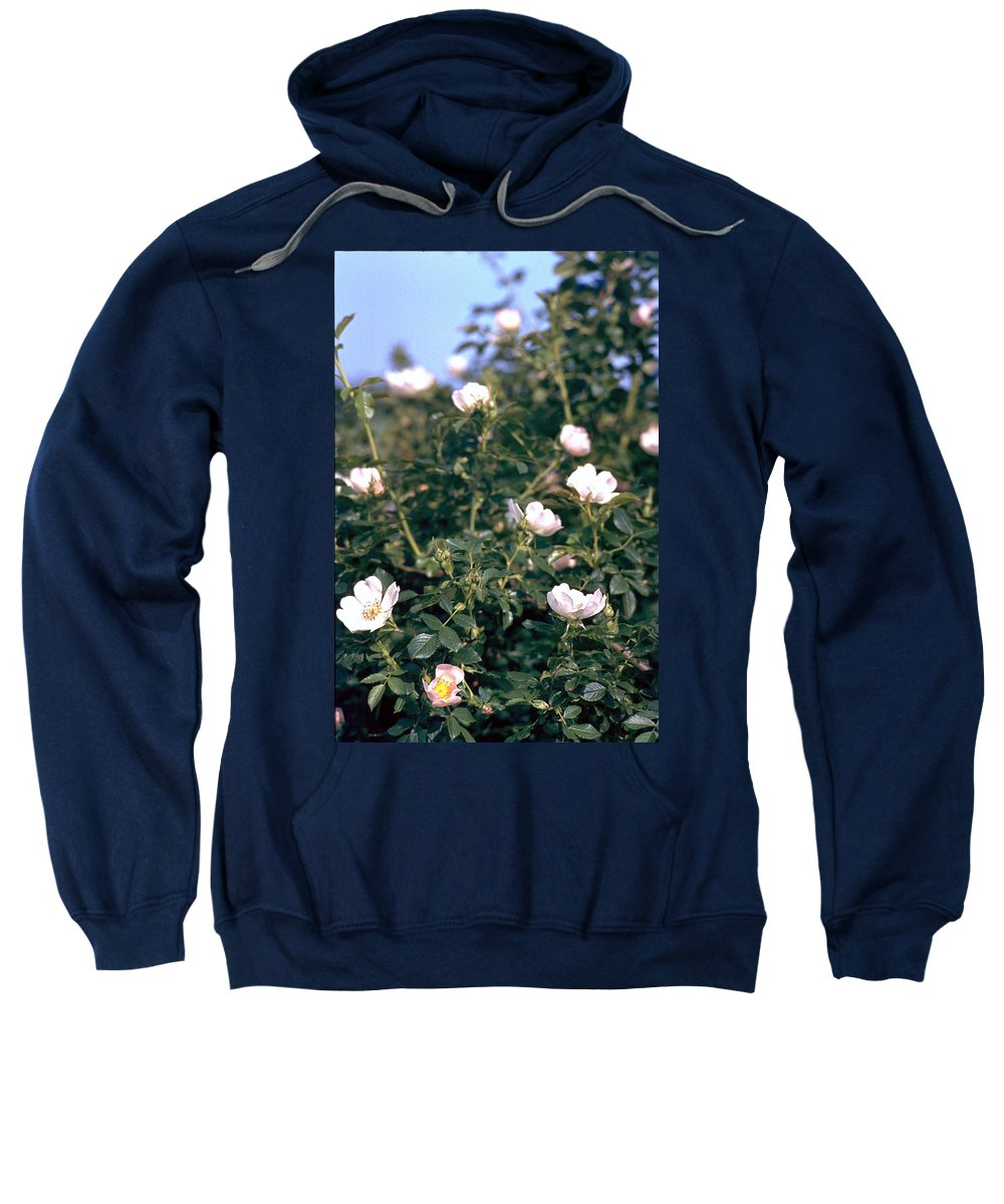 Anemone Sweatshirt featuring the photograph Anemone by Flavia Westerwelle