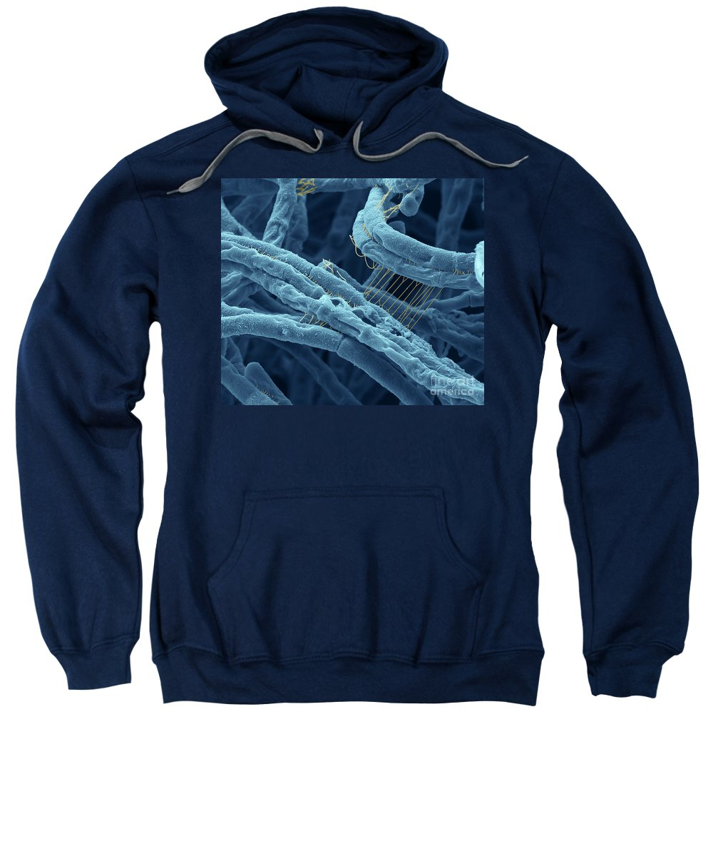 Sem Sweatshirt featuring the photograph Anthrax Bacteria Sem by Eye Of Science and Photo Researchers