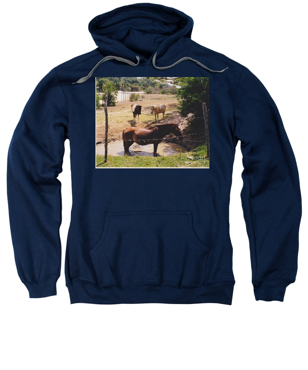 Horses Sweatshirt featuring the photograph Bathing Horse by Michelle Powell