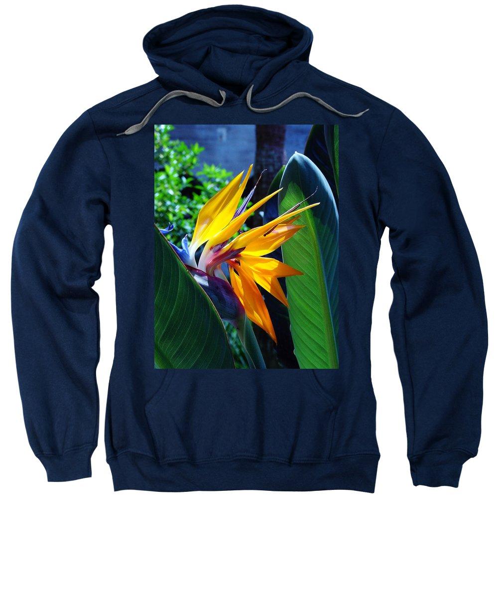Flowers Sweatshirt featuring the photograph Bird Of Paradise by Susanne Van Hulst