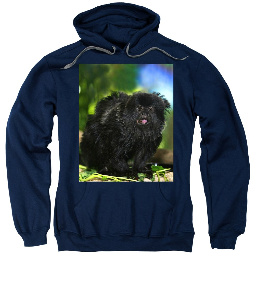 Wildlife Sweatshirt featuring the photograph Black Marmoset by Anthony Jones