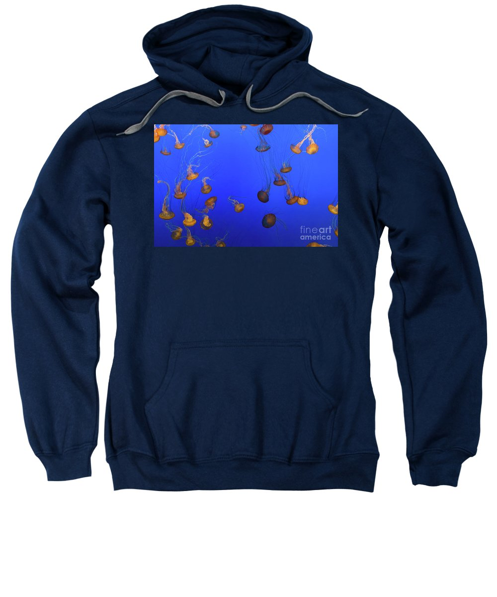 Nature Sweatshirt featuring the photograph Black Sea Nettle Jellyfish - Monterey by Henk Meijer Photography