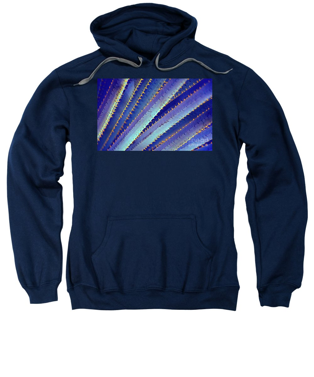 Yucca Sweatshirt featuring the photograph Blue Yucca by Elisabeth Lucas