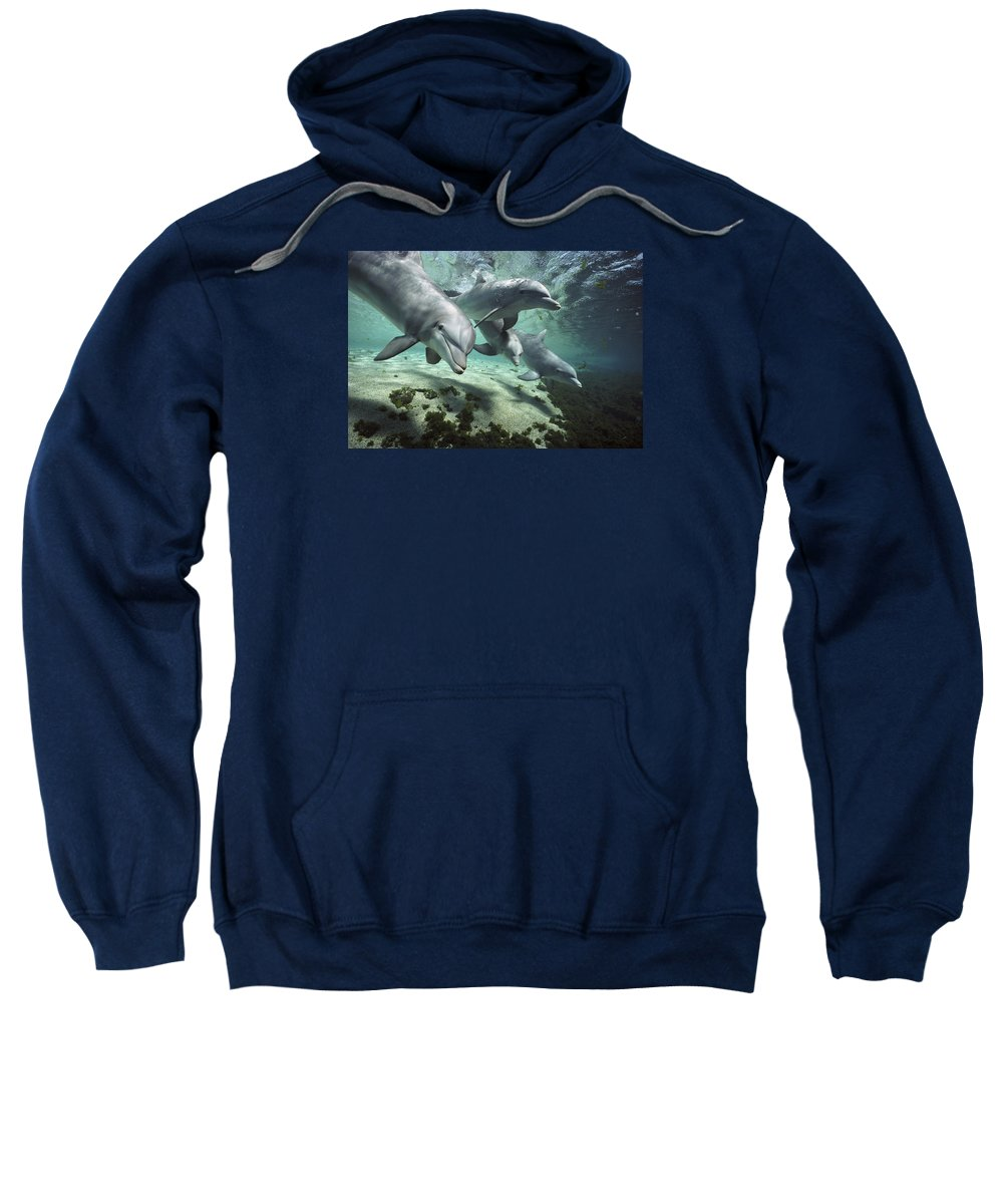 00082400 Sweatshirt featuring the photograph Four Bottlenose Dolphins Hawaii by Flip Nicklin