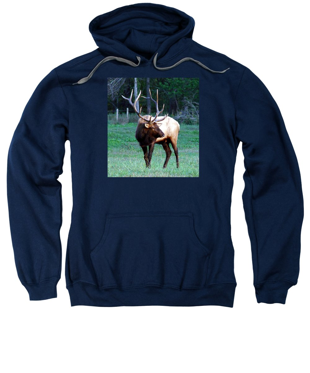 Elk Sweatshirt featuring the photograph Bull Elk II by Mary Halpin