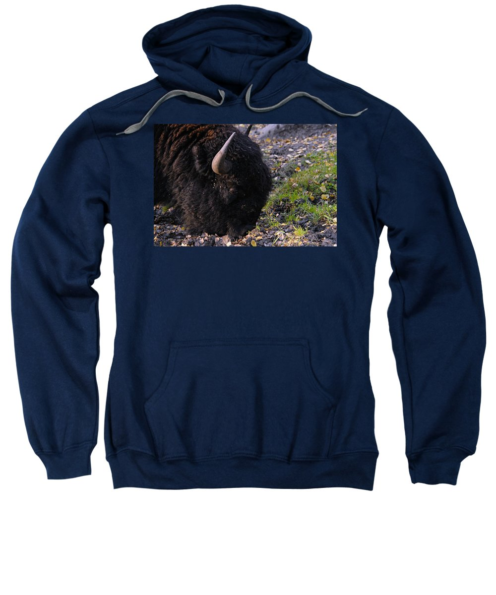 American Bison Sweatshirt featuring the photograph Bulls Eye by Larry Ricker