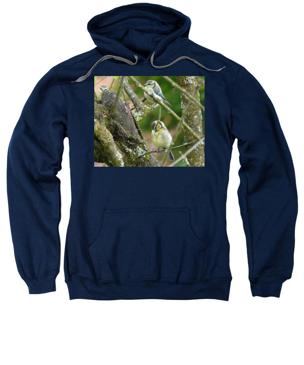 Bird Sweatshirt featuring the photograph Busy Tree by Valerie Ornstein