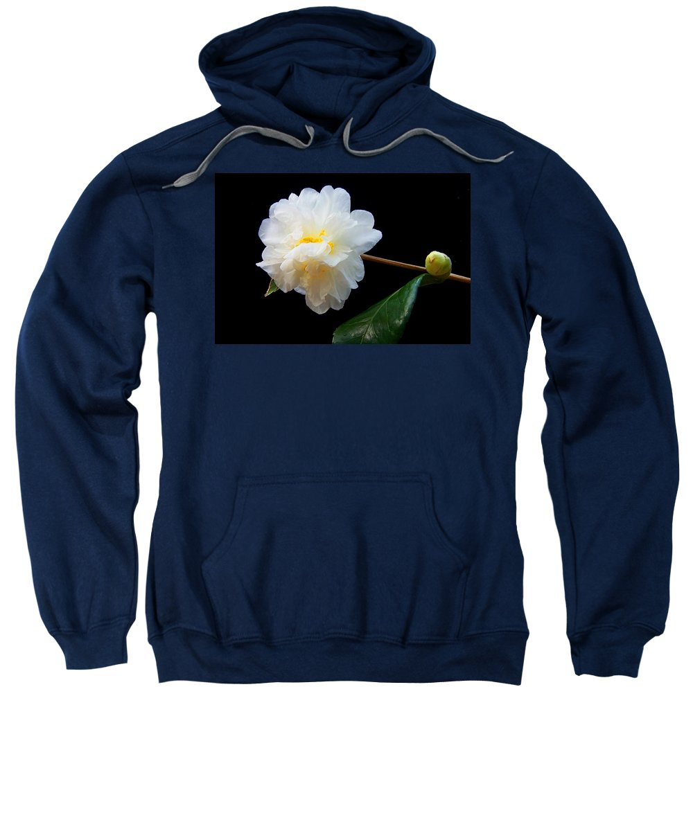 Camelia Sweatshirt featuring the photograph Camelia Trio by Laurie Paci