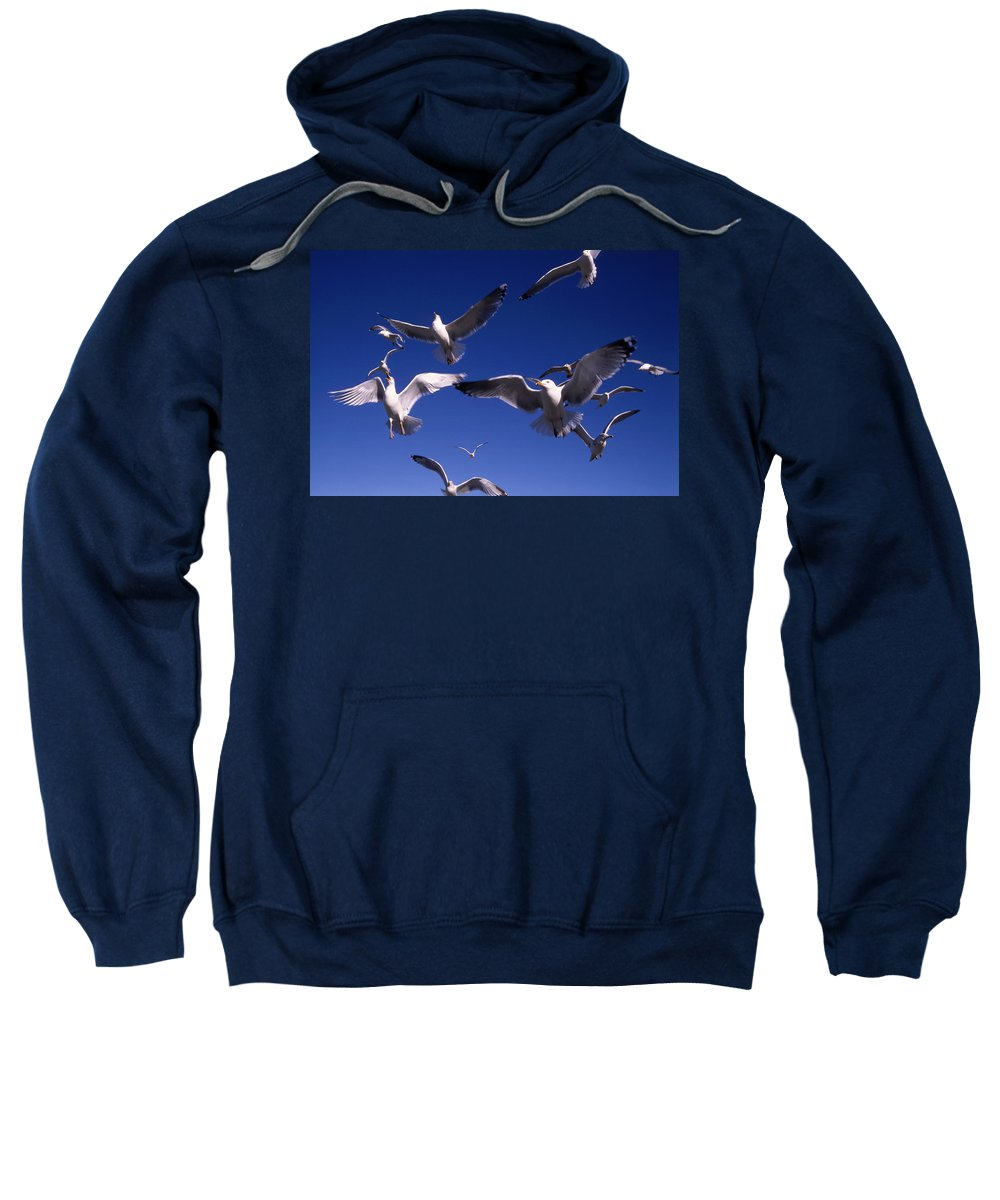 Seagull Birds Flight Sweatshirt featuring the photograph Cnrg0302 by Henry Butz