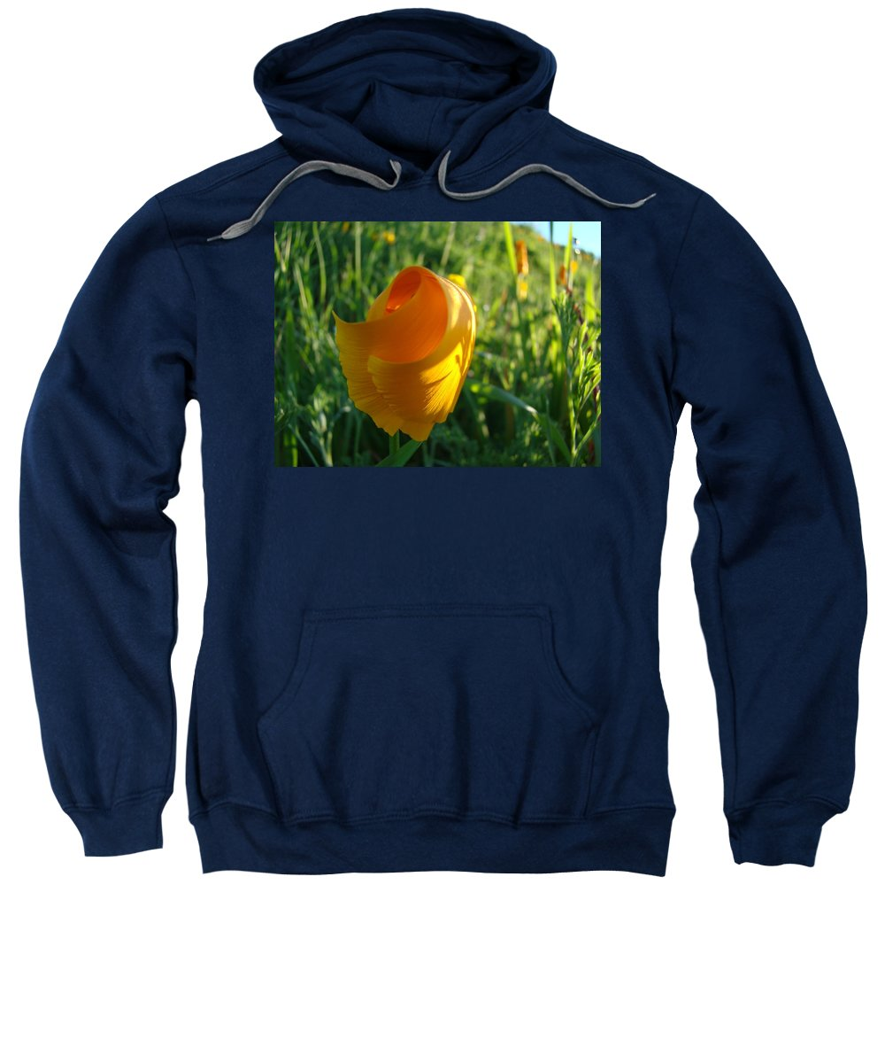 �poppies Artwork� Sweatshirt featuring the photograph Contemporary Orange Poppy Flower Unfolding In Sunlight 10 Baslee Troutman by Baslee Troutman