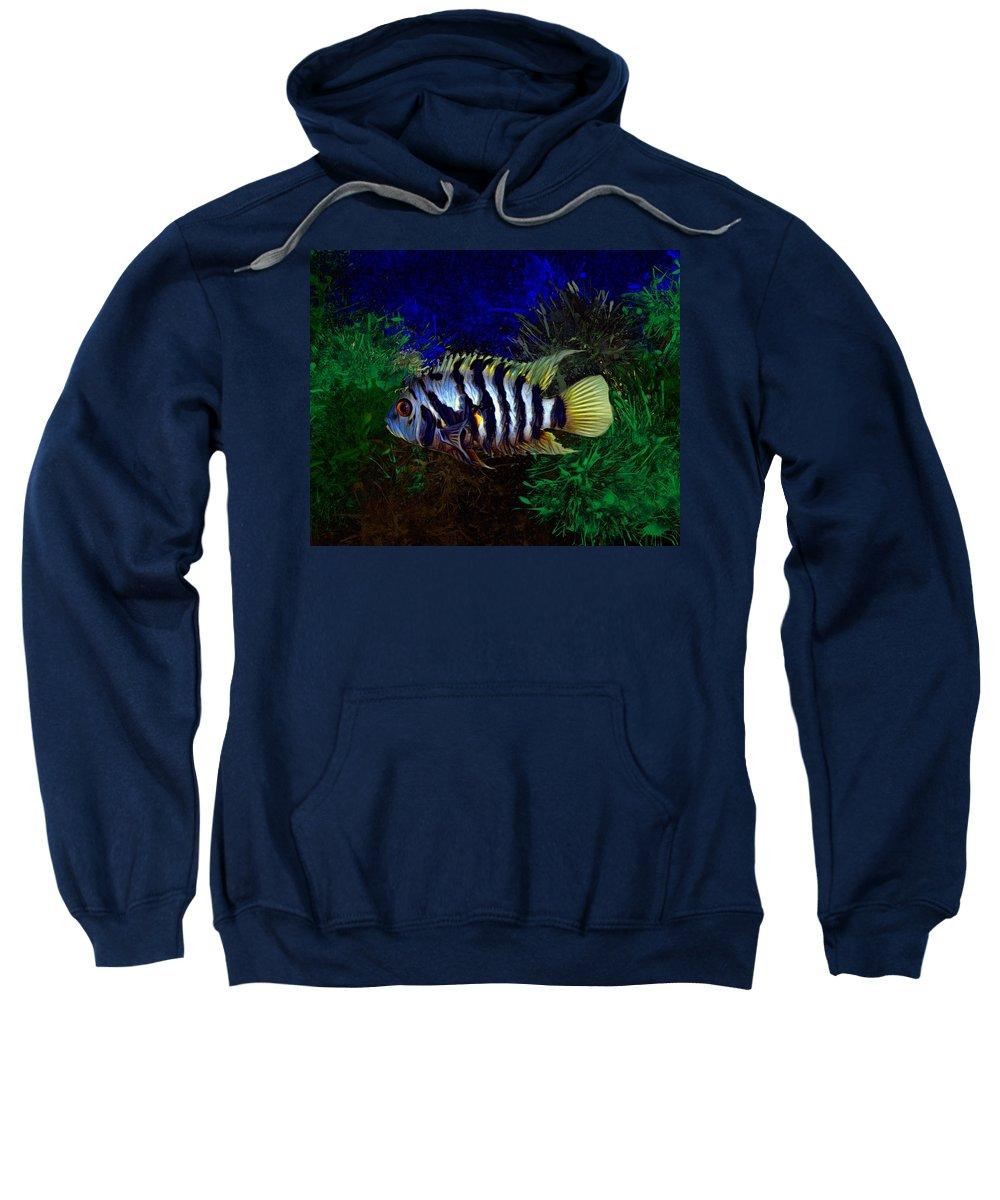 Convict Sweatshirt featuring the digital art Convict Cichlid Fish by Scott Wallace Digital Designs