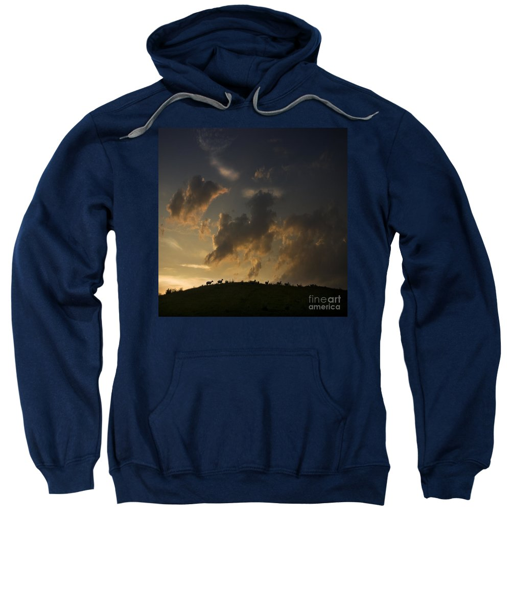 Sheep Sweatshirt featuring the photograph Counting The Sheep Before Sleeping by Angel Ciesniarska