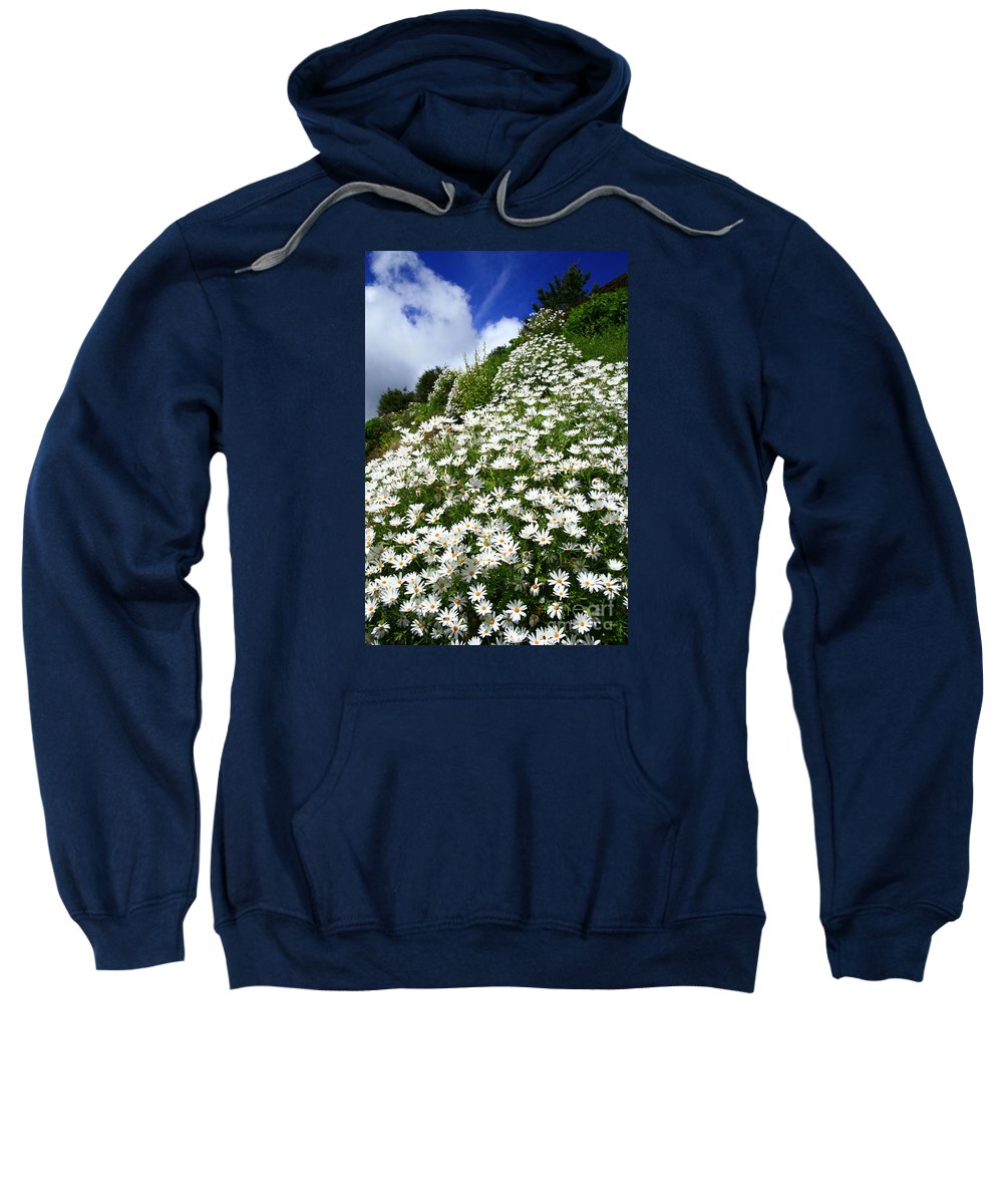 Countryside Sweatshirt featuring the photograph Daisies by Gaspar Avila