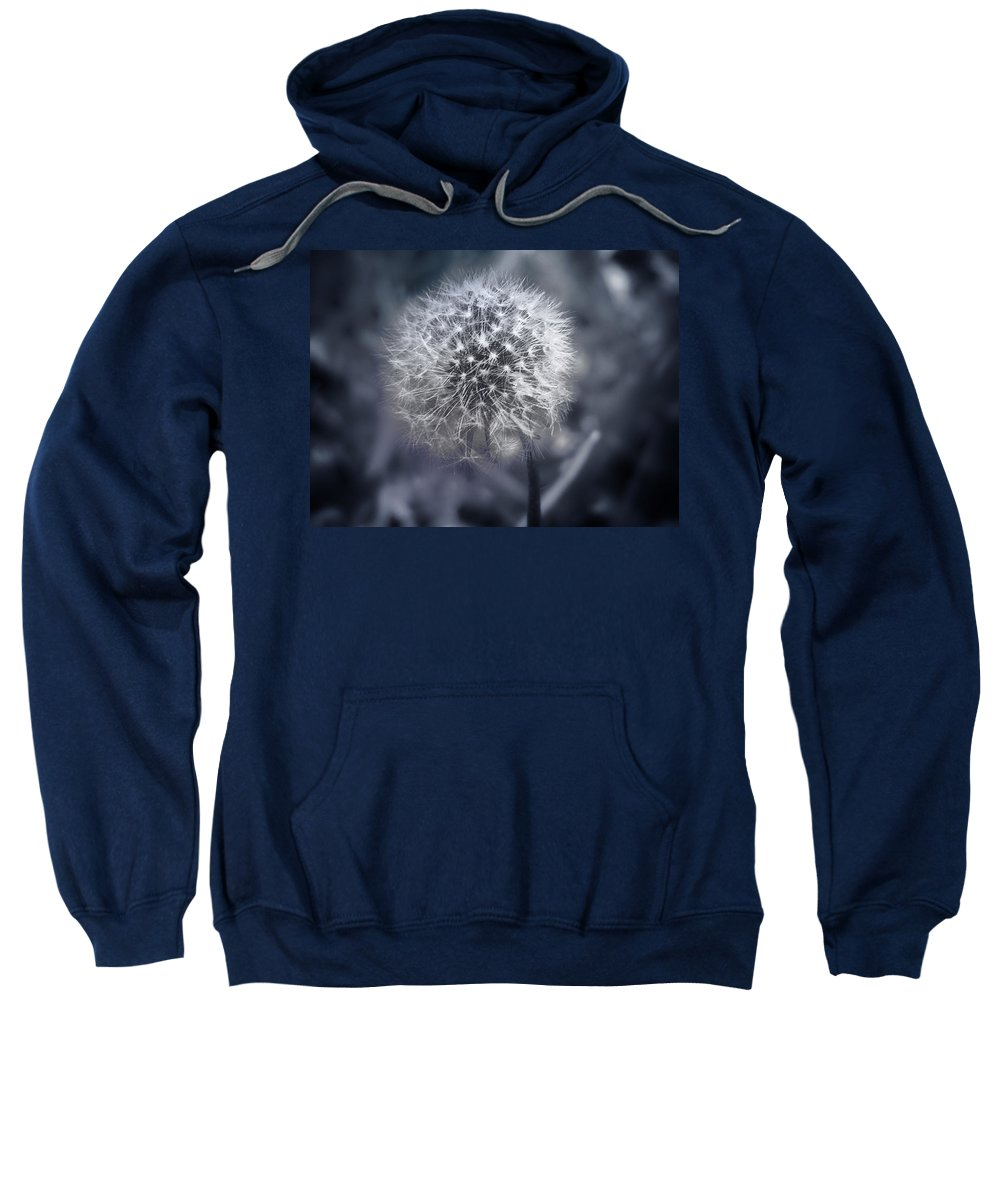 Dandilion Sweatshirt featuring the photograph Dandilion by Bill Cannon
