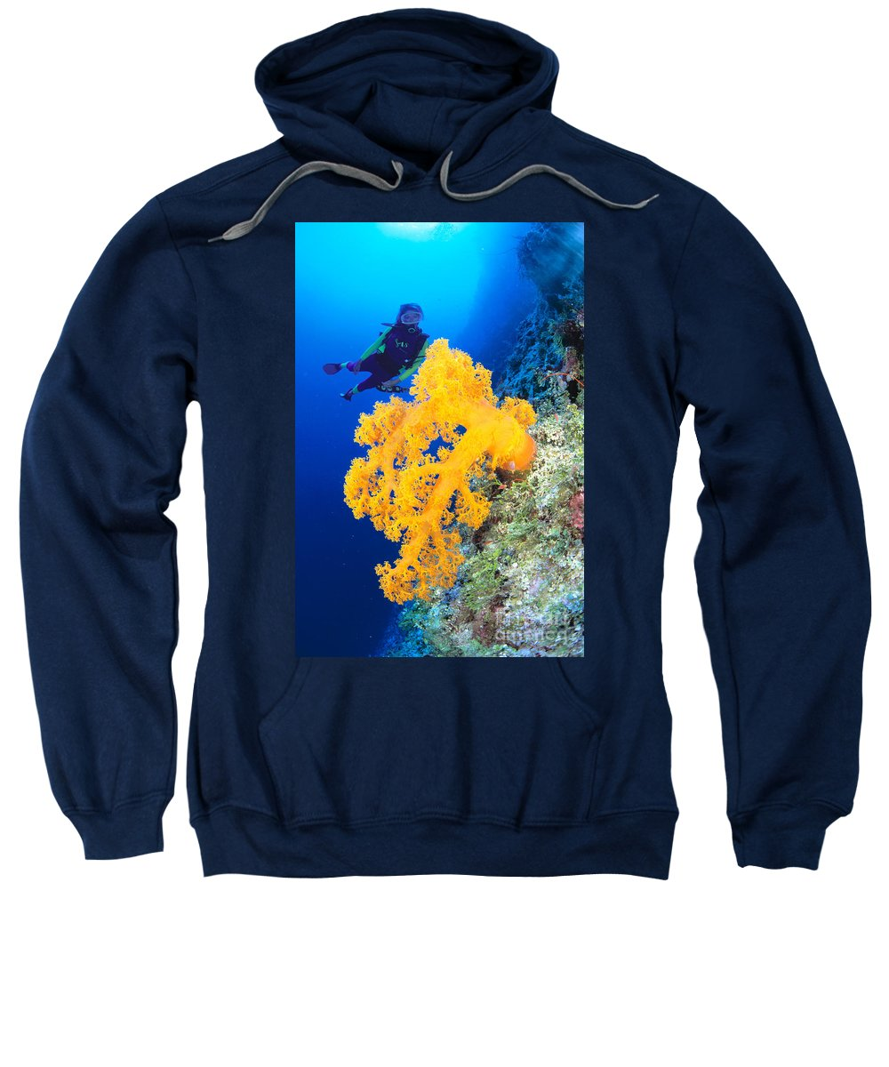 Alcyonarian Sweatshirt featuring the photograph Diving, Australia by Dave Fleetham - Printscapes