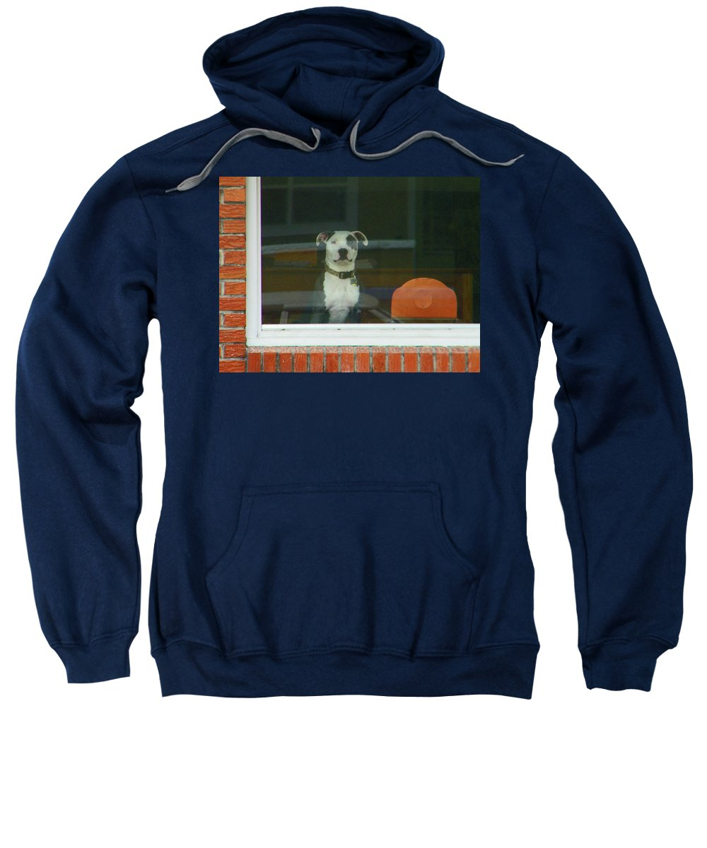 Abstract Sweatshirt featuring the photograph Doggie In The Window by Lenore Senior