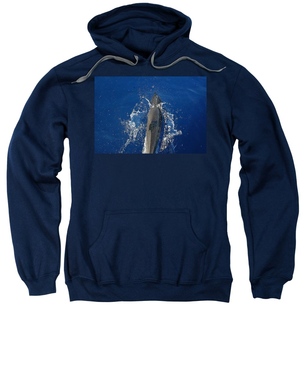 Dolphin Sweatshirt featuring the photograph Dolphin by J R Seymour