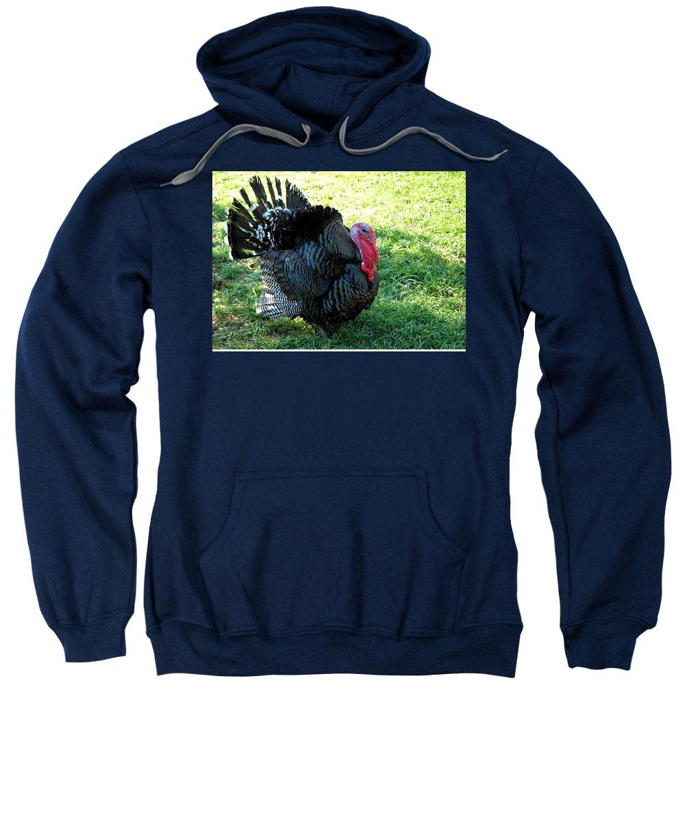 Usa Sweatshirt featuring the photograph Evil Eye From Foul Turkey by LeeAnn McLaneGoetz McLaneGoetzStudioLLCcom