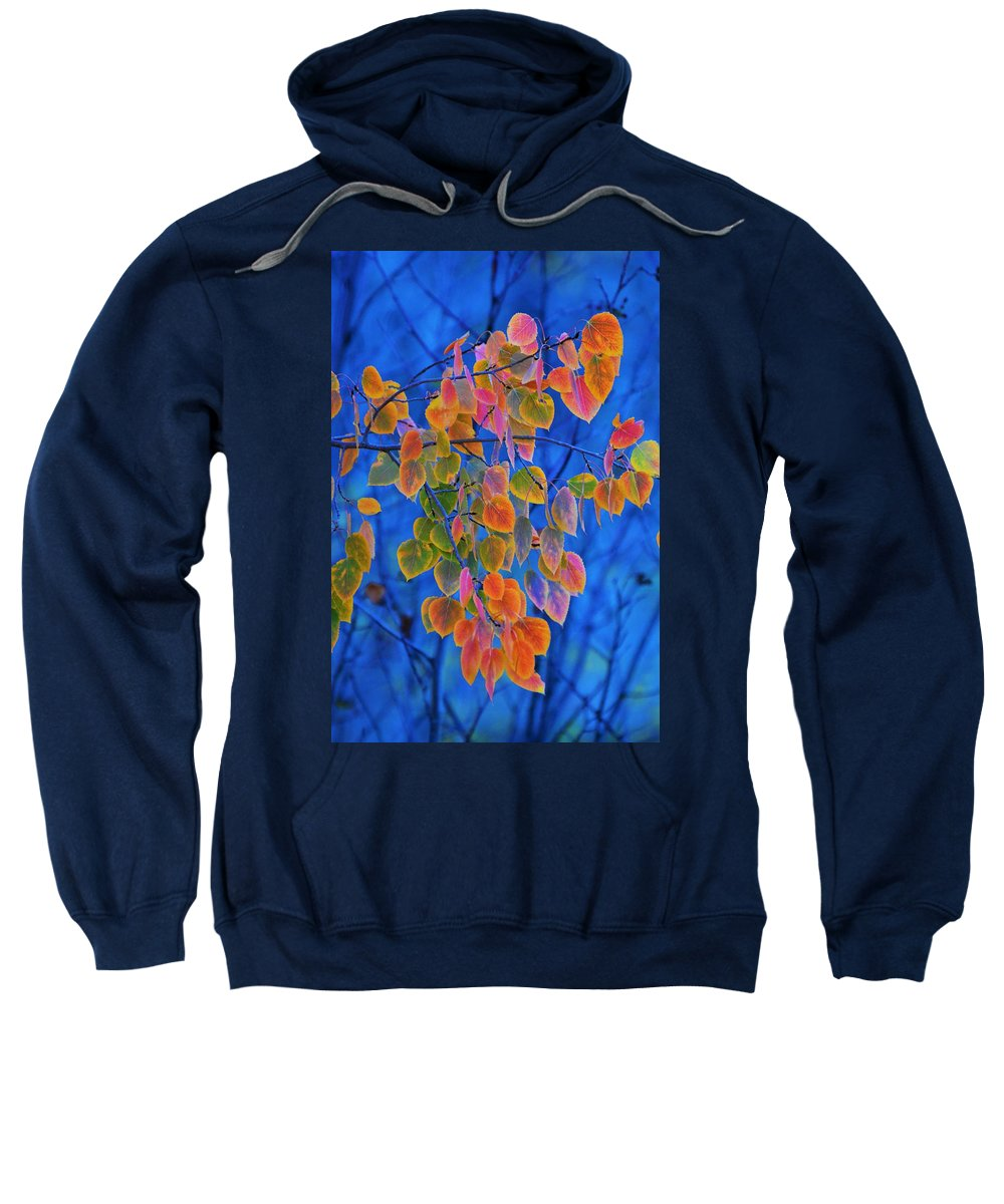 Aspen Sweatshirt featuring the photograph Fall Color by Tim Nicholson