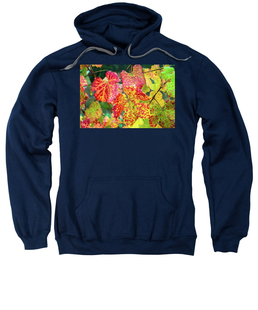 Landscape Sweatshirt featuring the photograph Fall Colors At The Vineyard by Javier Flores