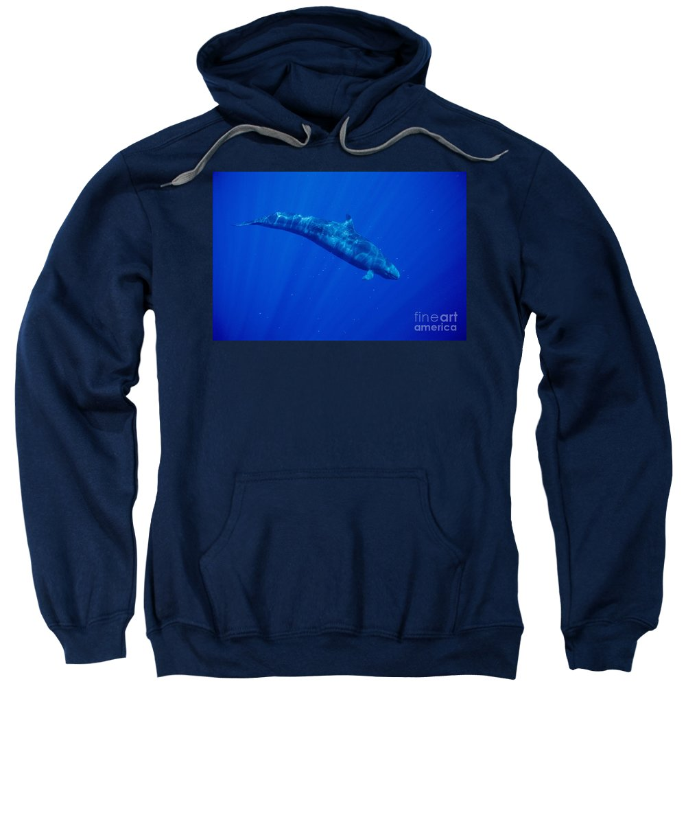 200 Sweatshirt featuring the photograph False Killer Whale by Dave Fleetham - Printscapes