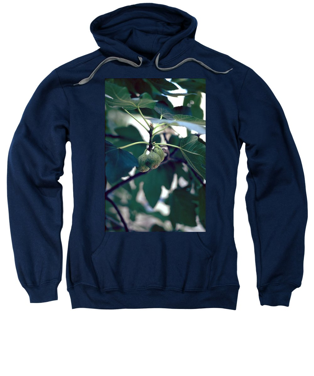 Fig Sweatshirt featuring the photograph Fig by Flavia Westerwelle