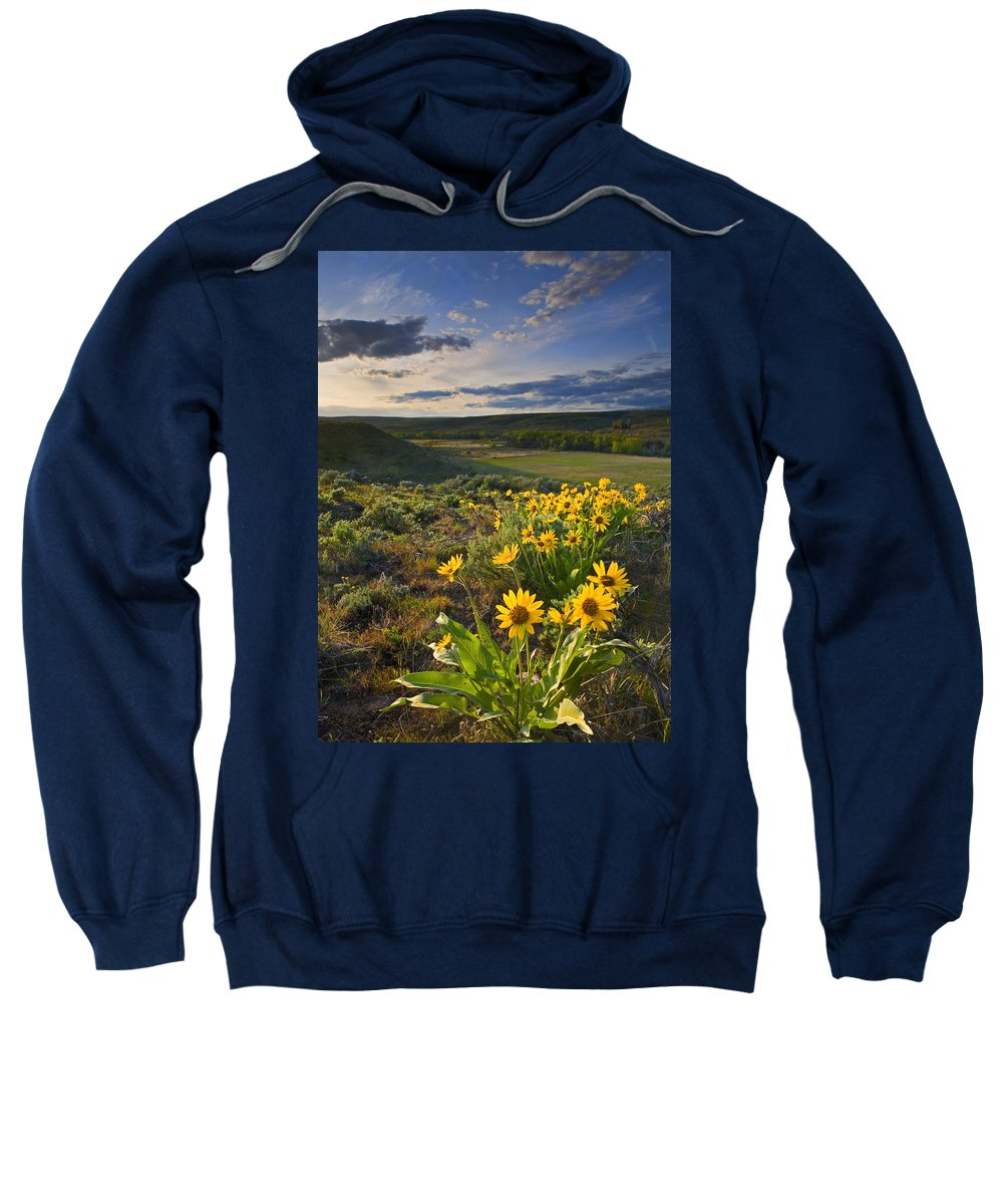 Balsamroot Sweatshirt featuring the photograph Golden Hills by Mike Dawson