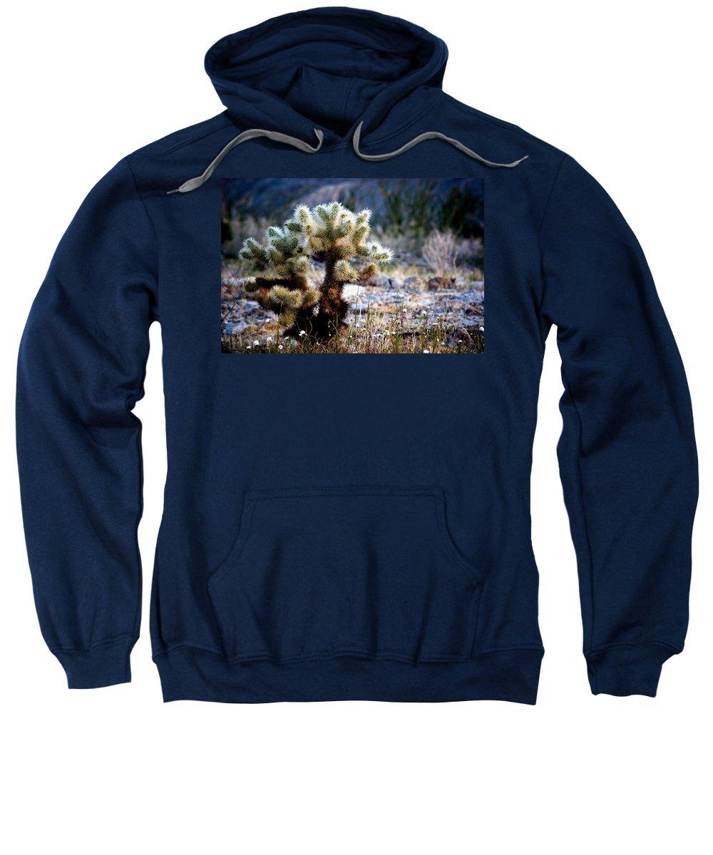 Teddy Bear Cholla Sweatshirt featuring the photograph Good Morning Teddy by Chris Brannen