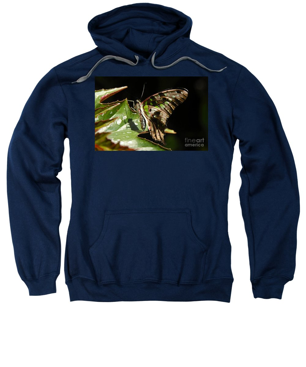 Butterfly Sweatshirt featuring the photograph Green Checkered Skipper by David Lee Thompson