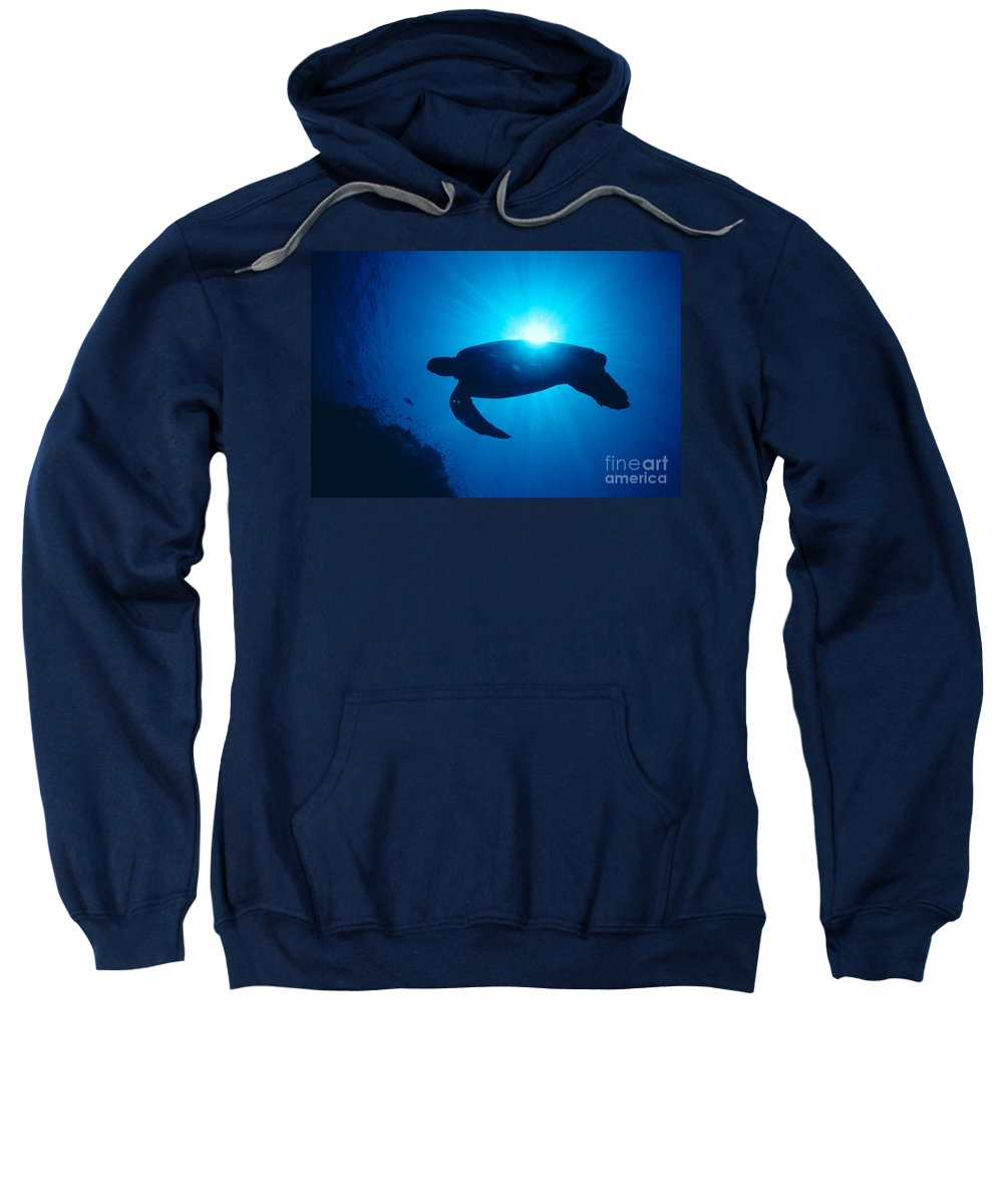 Animal Art Sweatshirt featuring the photograph Green Sea Turtle by Ed Robinson - Printscapes