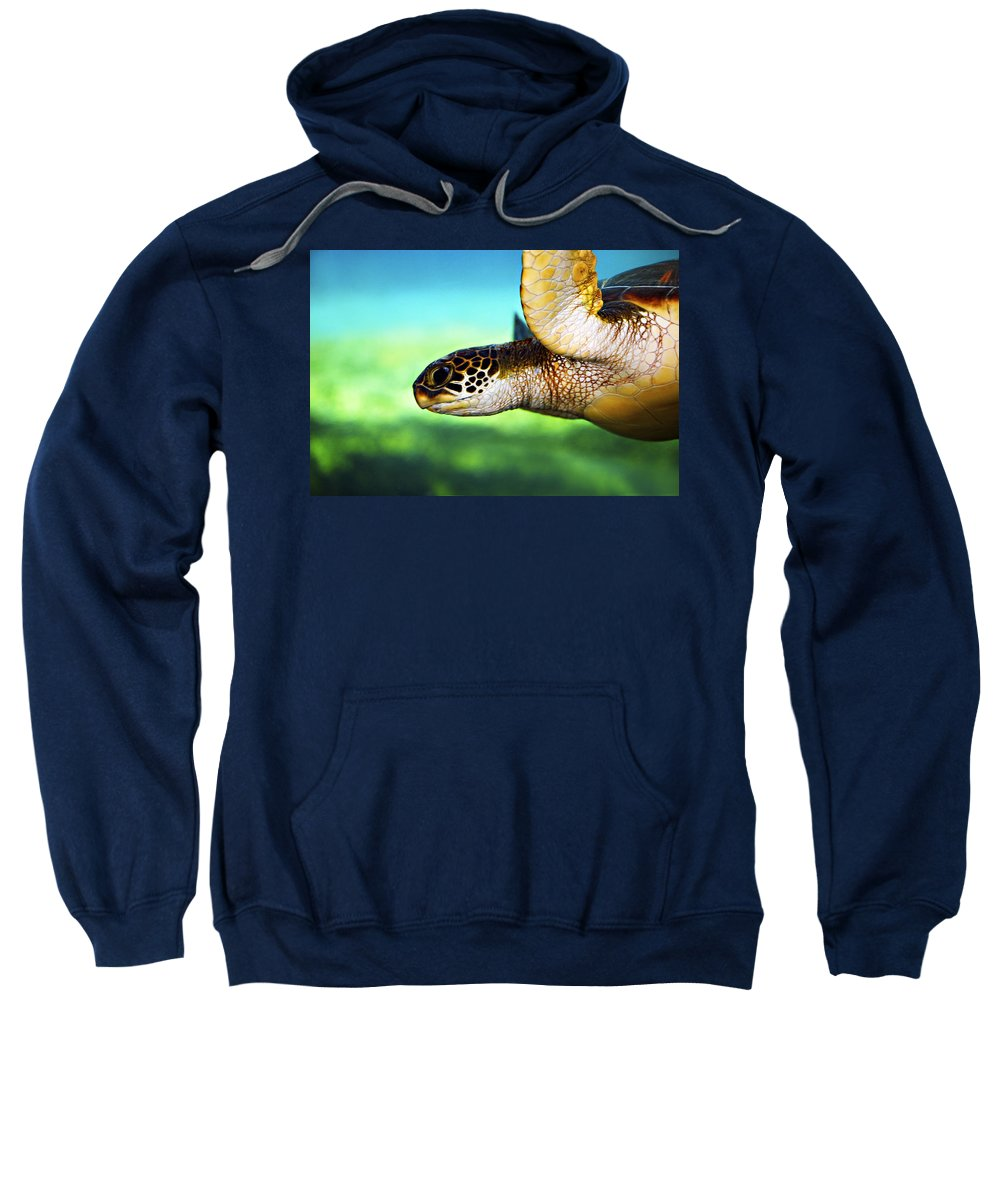 Green Sweatshirt featuring the photograph Green Sea Turtle by Marilyn Hunt