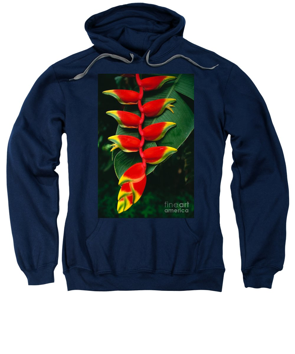 Bill Schildge Sweatshirt featuring the photograph Hanging Heliconia by Bill Schildge - Printscapes