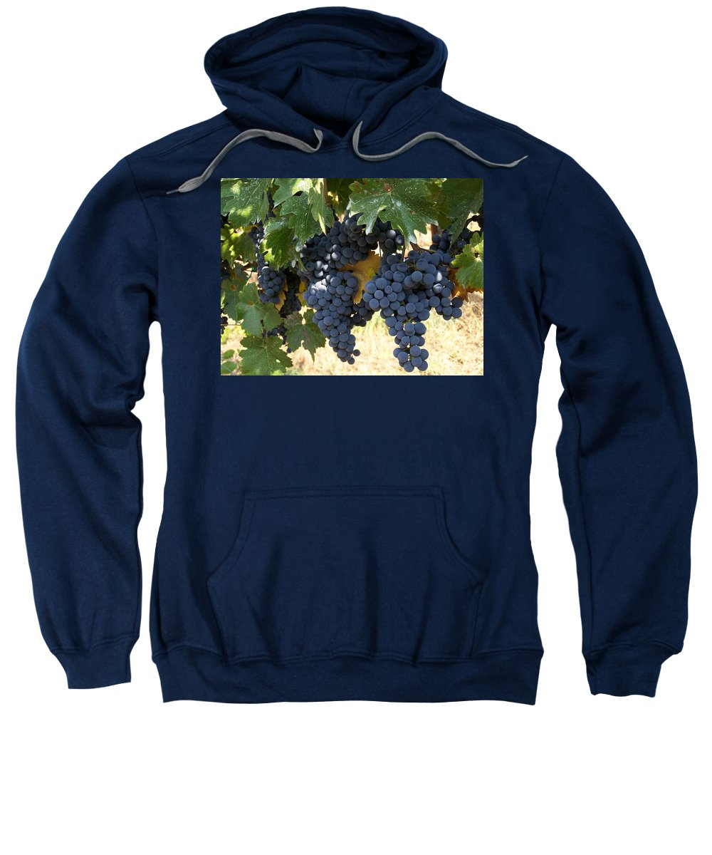 Grapes Sweatshirt featuring the photograph Harvest Time by Gale Cochran-Smith