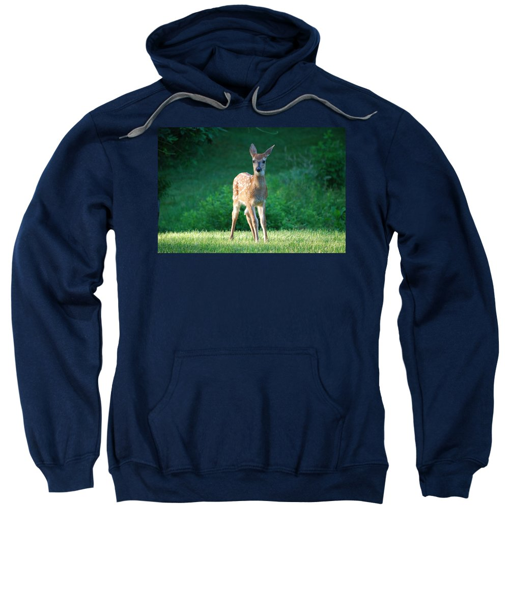 Deer Sweatshirt featuring the photograph I'm Cute by Lori Tambakis