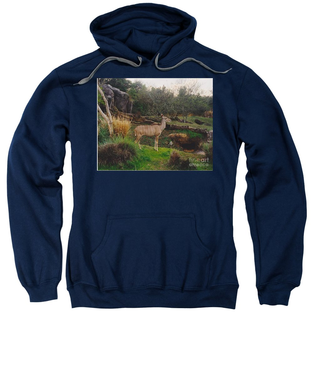 Scenery Sweatshirt featuring the photograph In The Jungle by Michelle Powell