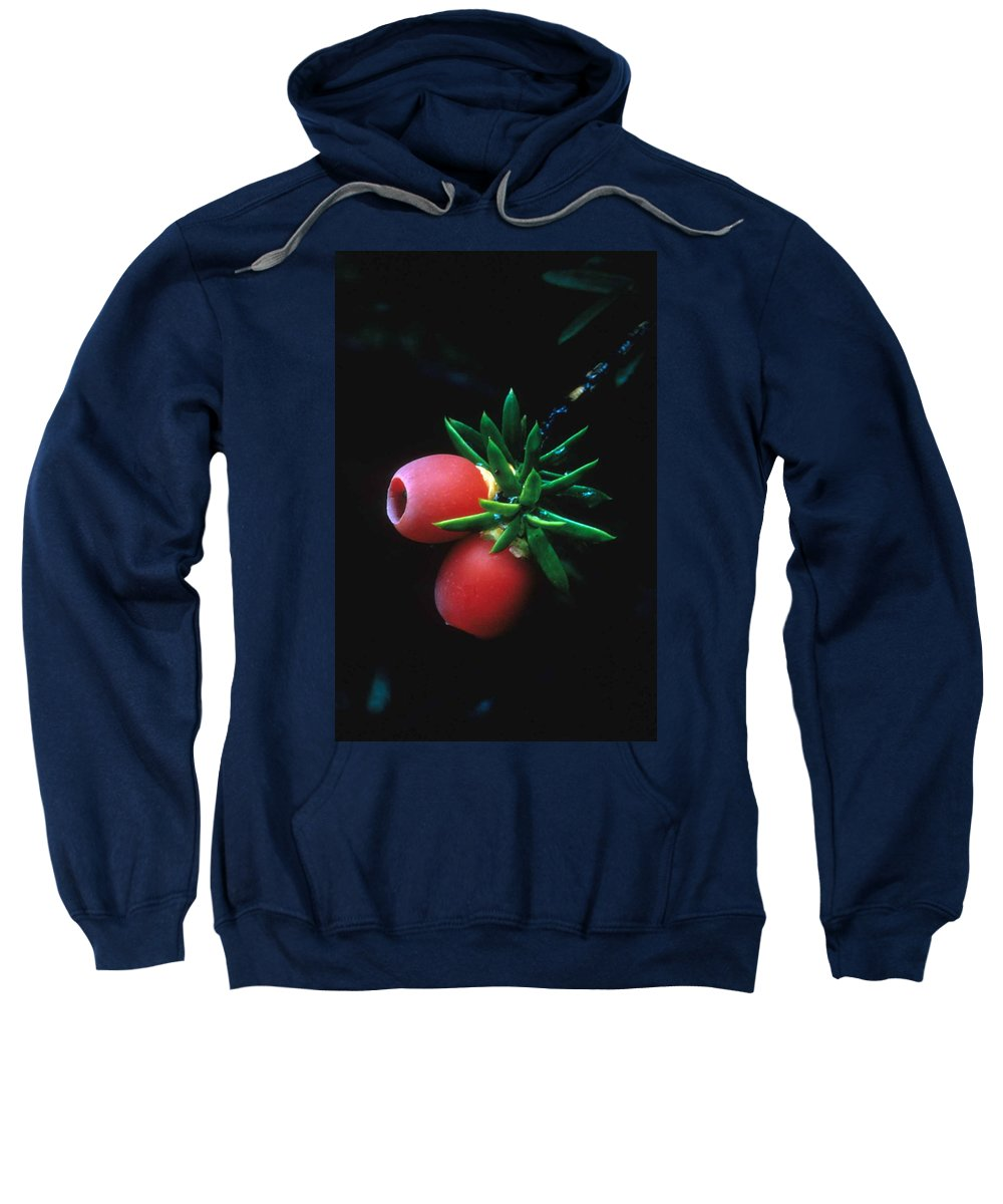Juniper Berries Sweatshirt featuring the photograph Juniper Berries by Laurie Paci