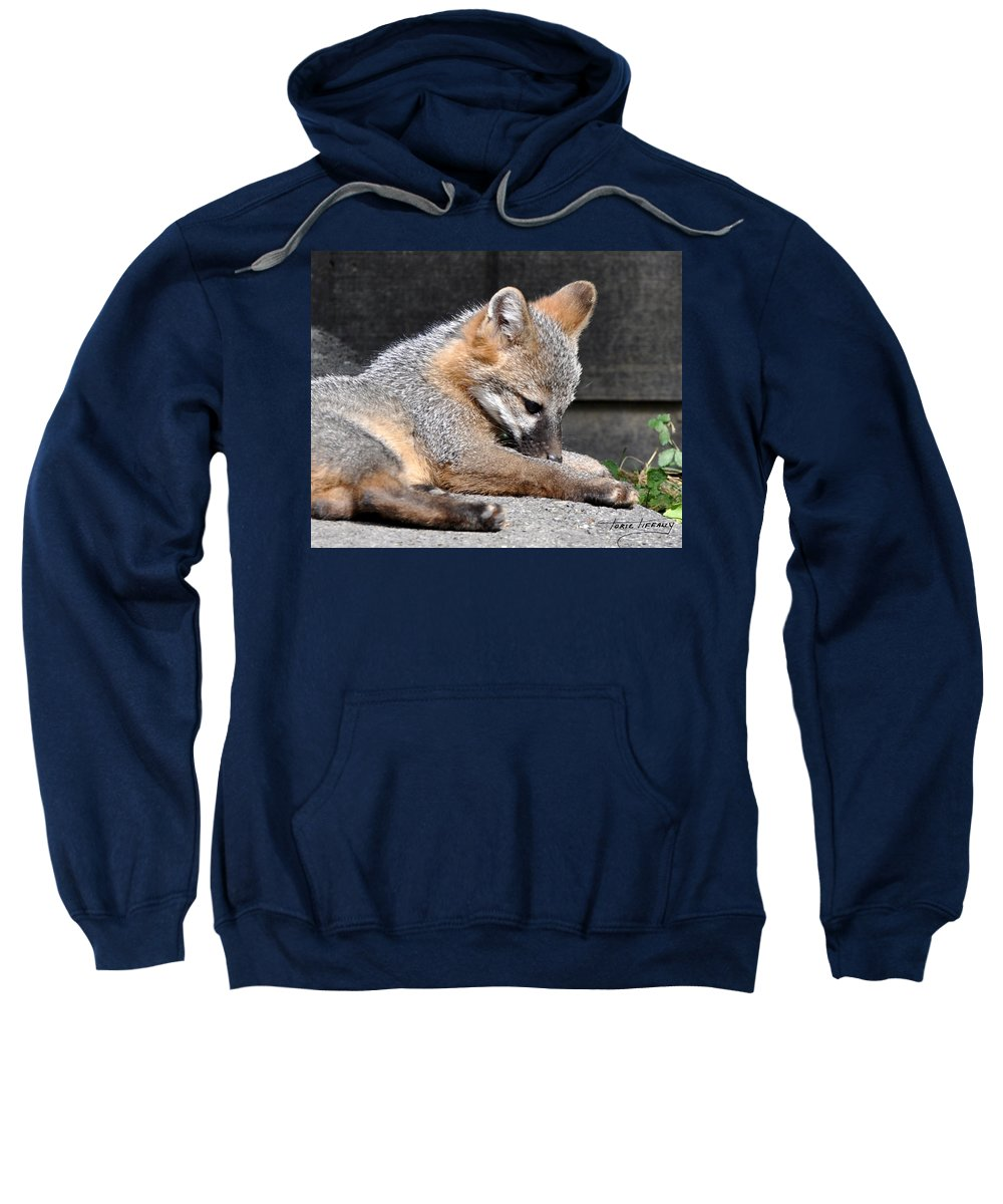 Kit Fox Sweatshirt featuring the photograph Kit Fox8 by Torie Tiffany