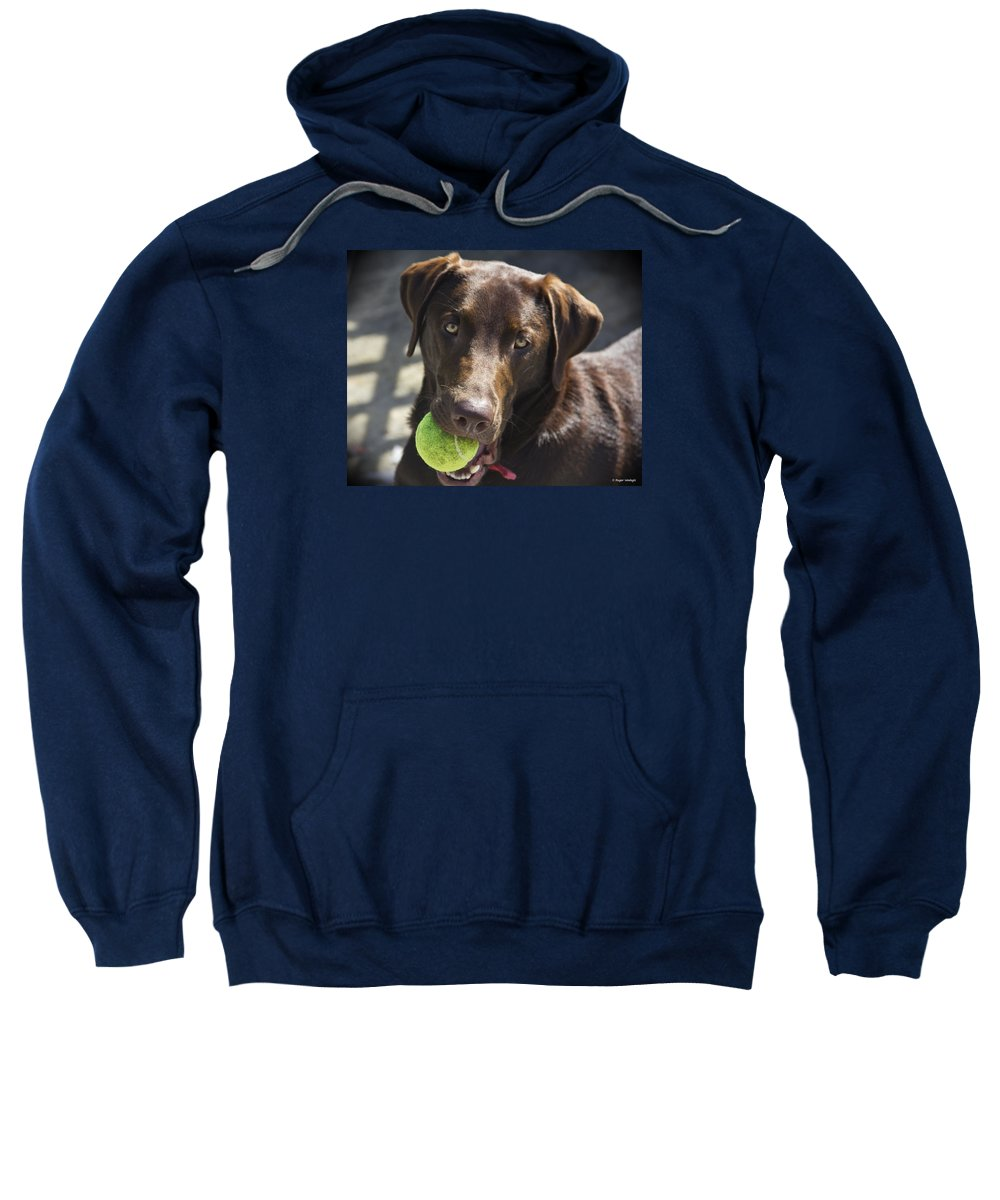 Labrador Retriever Sweatshirt featuring the photograph Lets Play Ball by Roger Wedegis
