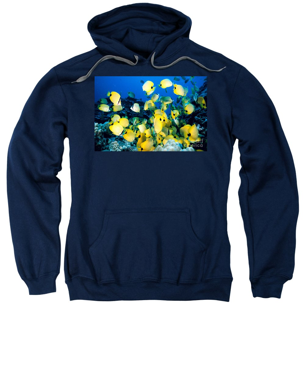 Animal Art Sweatshirt featuring the photograph Lined Butterflyfish by Bob Abraham - Printscapes