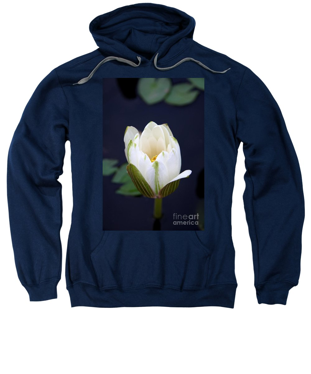 Waterliy Sweatshirt featuring the photograph Loveliness by Christiane Schulze Art And Photography