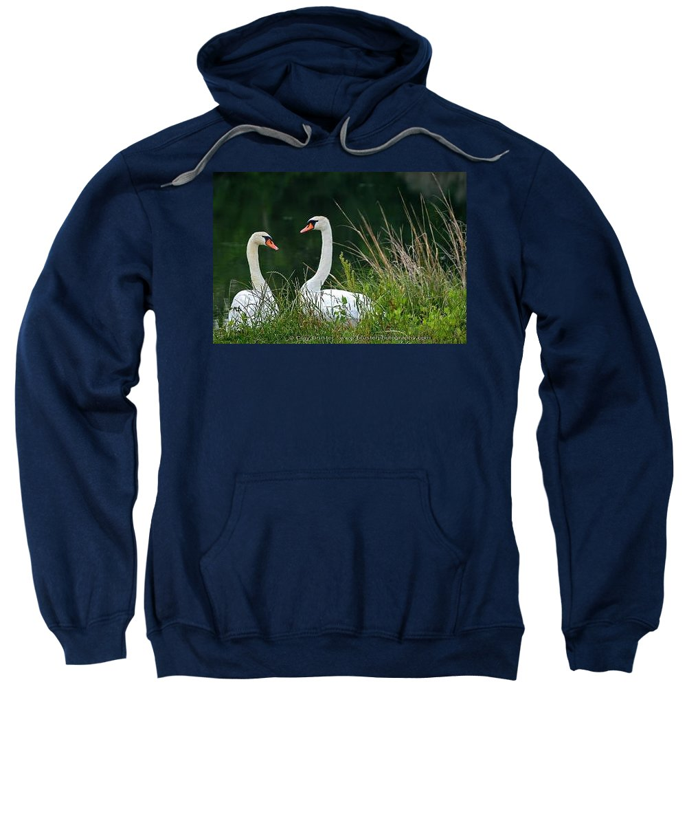Clay Sweatshirt featuring the photograph Loving Swans by Clayton Bruster