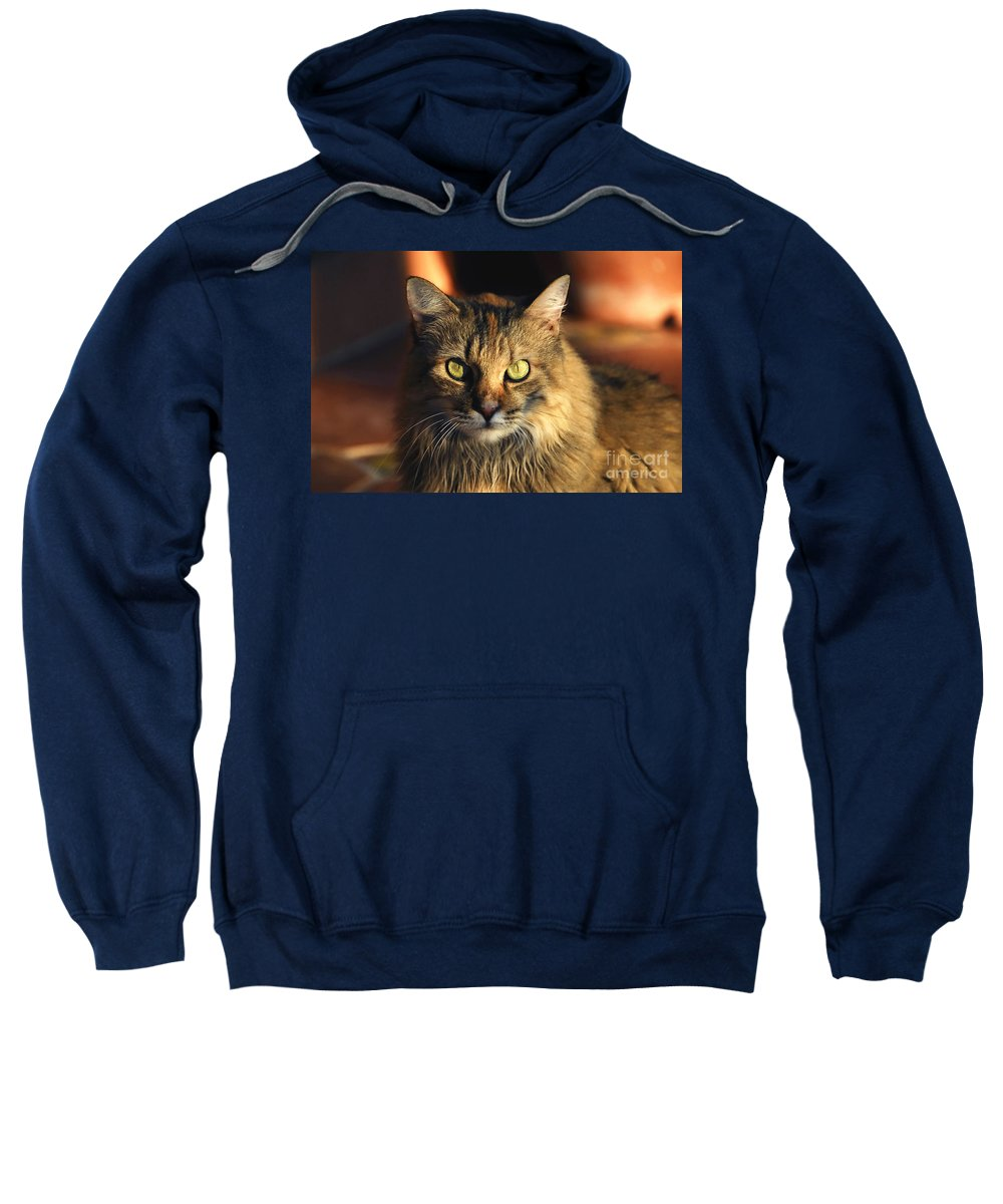 Main Coone Sweatshirt featuring the photograph Main Coone by David Lee Thompson