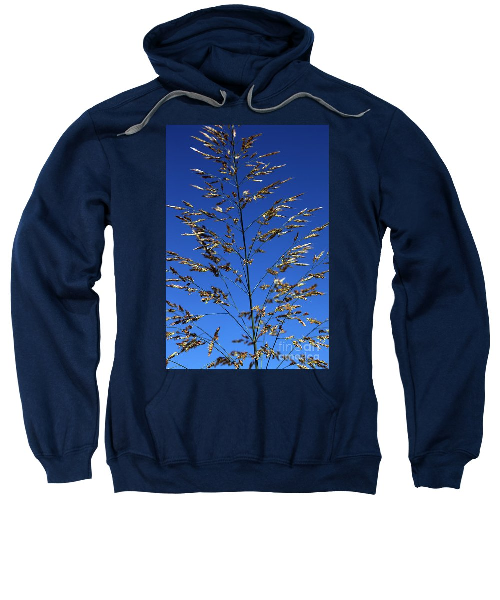Nature Sweatshirt featuring the photograph Making A Sound by Amanda Barcon
