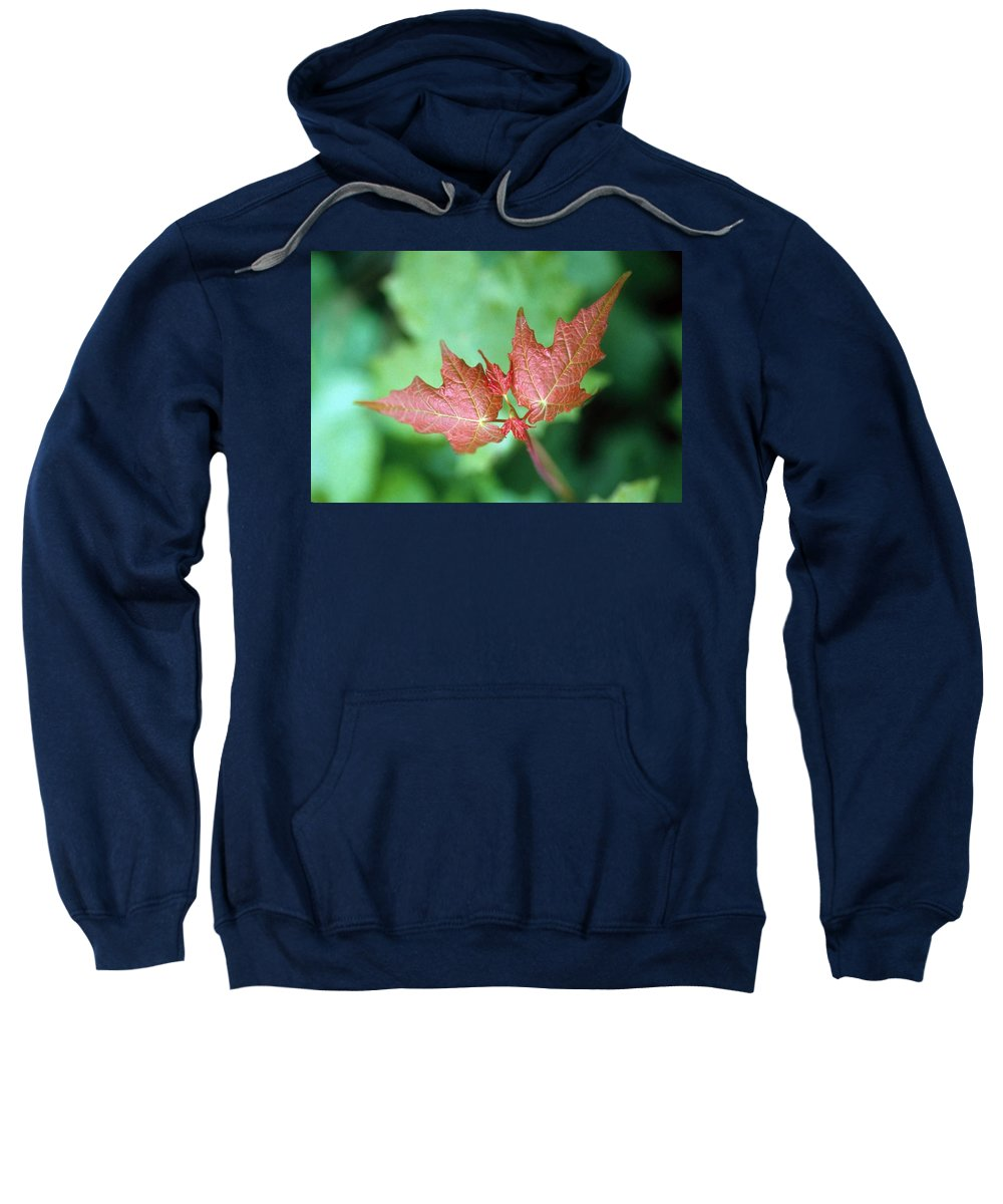 Maple Leaf Sweatshirt featuring the photograph Maple Red And Green by Laurie Paci
