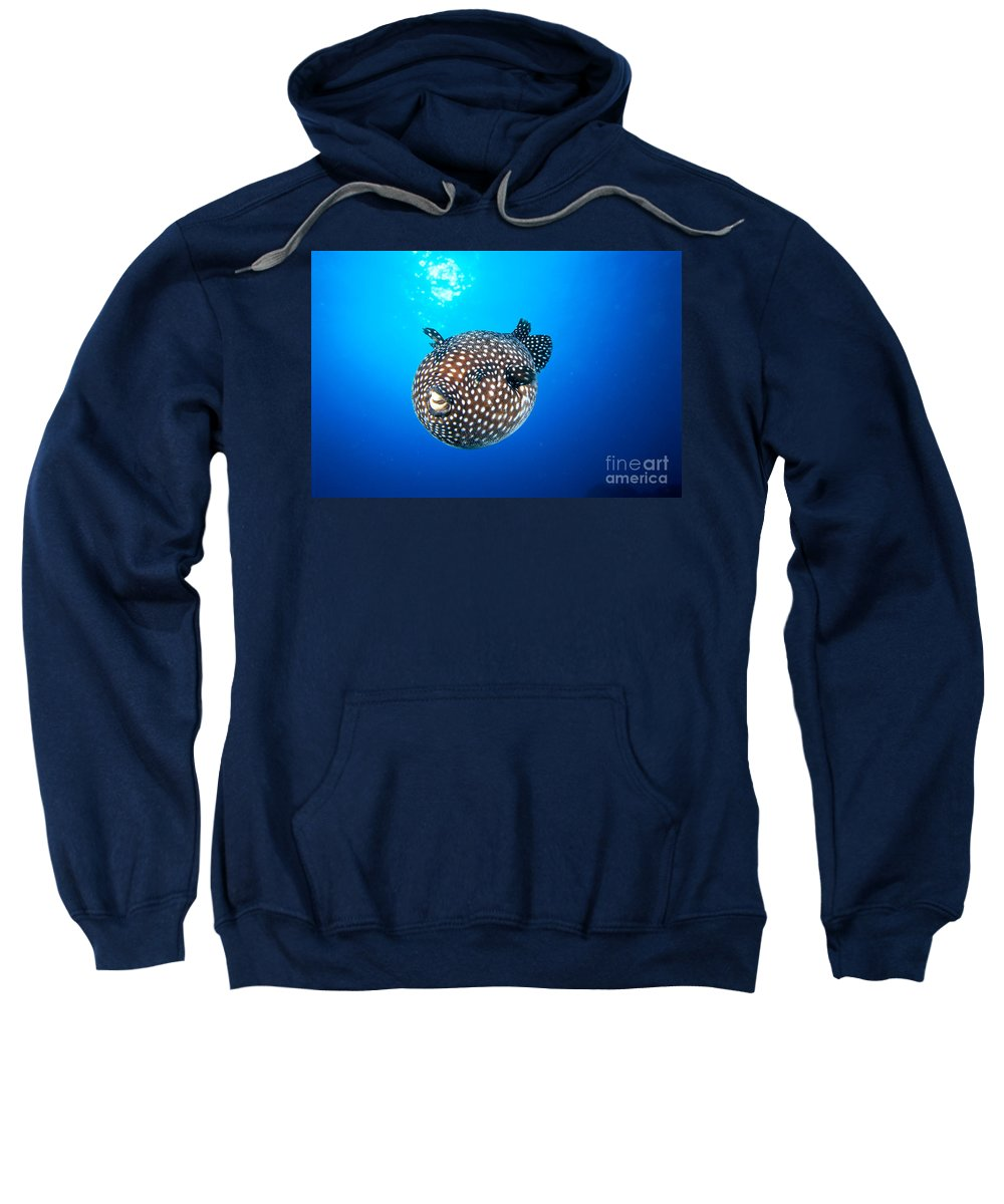 Amaze Sweatshirt featuring the photograph Mexico Guineafowl Puffer by Dave Fleetham - Printscapes